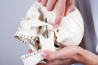 Hand holding a skull showing the location of Temporomandibular Joint.